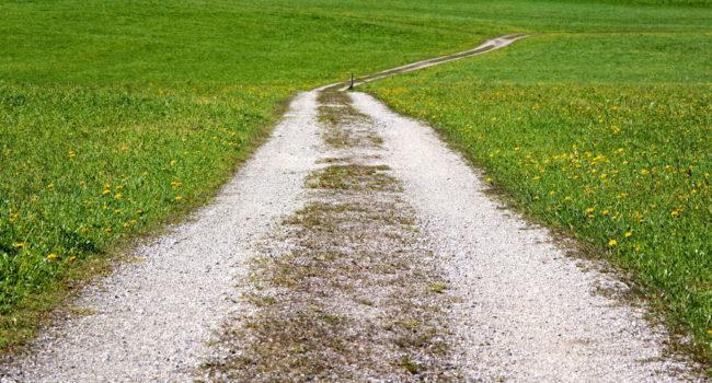 chemin au milieu de champ à Thouars